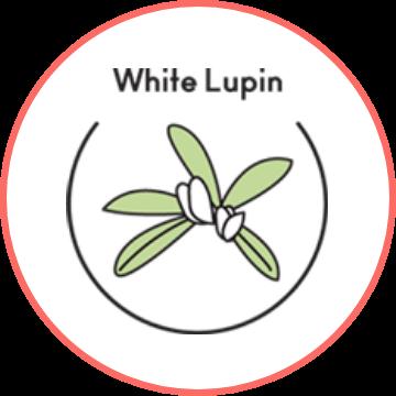 White Lupin
