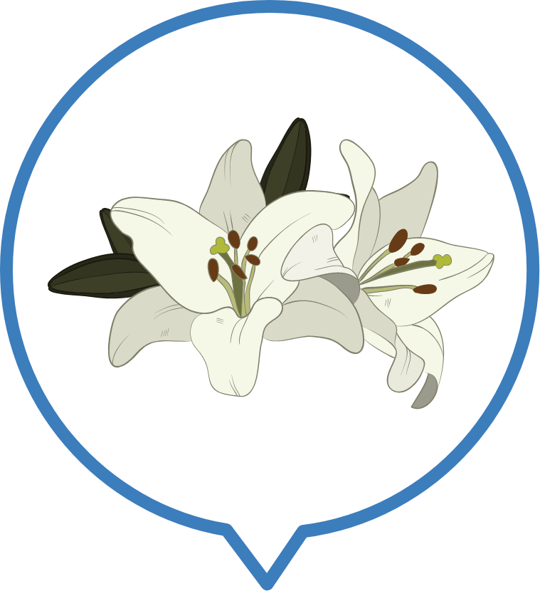 ดอกไวท์ลิลลี่