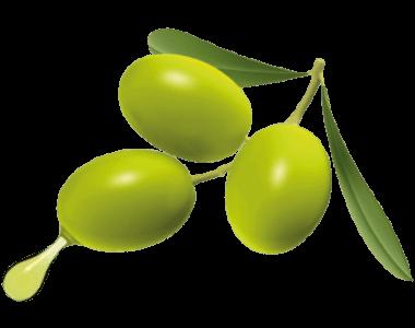 OliveM สารสกัดจากผลมะกอก