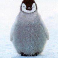 penguin005