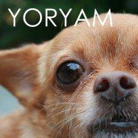 yoryam